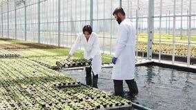 L'uomo e la donna in laboratorio veste il lavoro con le piante verdi in una serra stock footage
