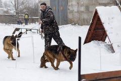L'uomo forma i pastori tedeschi, nell'inverno Immagini Stock Libere da Diritti