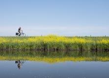 L'uomo guida la bicicletta lungo l'acqua di vicino valleikanaal leusden nei Paesi Bassi e passa i fiori di fioritura gialli del s fotografia stock