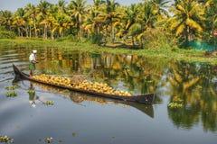 L'uomo indiano consegna le noci di cocco in barca Immagini Stock