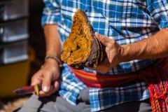L'uomo indigeno in camicia blu sta tenendo un fungo di chaga immagini stock