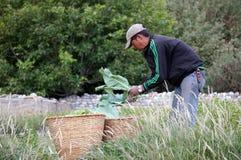 L'uomo nepalese lavora in un orto nepal Fotografia Stock