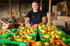 L'uomo organico felice dell'agricoltore con attraversato consegna i contenitori di pomodori Immagine Stock Libera da Diritti