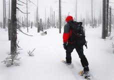 L'uomo passa attraverso il legno sugli snowshoes Immagini Stock