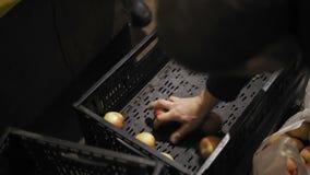 L'uomo piega le mele in pacchetto al deposito della frutta archivi video
