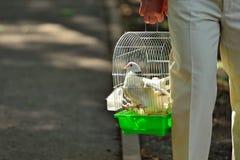 L'uomo porta le colombe bianche in una gabbia di ferro Fotografia Stock