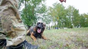 L'uomo prepara il suo cane per eseguire il comando di salto mortale video d archivio