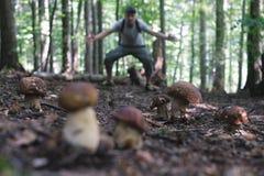 L'uomo raccoglie i funghi immagine stock libera da diritti