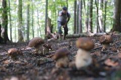 L'uomo raccoglie i funghi fotografie stock libere da diritti