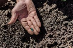 L'uomo scava la terra con una pala Immagini Stock