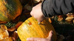 L'uomo scolpisce il fronte per una zucca di Halloween Preparando per la festa di autunno archivi video