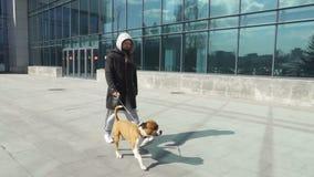 L'uomo sta andando camminare il cane stock footage