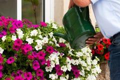 L'uomo sta innaffiando i fiori Immagini Stock Libere da Diritti
