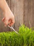 L'uomo taglia l'erba per prato inglese con le forbici, prato inglese fresco del taglio Fotografia Stock Libera da Diritti
