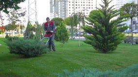 L'uomo taglia l'erba su prato inglese con la falciatrice da giardino di aiuto e prepara le vie della città per la molla archivi video