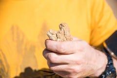 L'uomo tiene tre lucertole macchiate dell'agama di Toadhead immagine stock libera da diritti