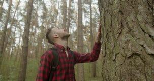 L'uomo tocca il pino stock footage