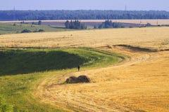 L'uomo va lontano nei campi e nei prati Fotografia Stock Libera da Diritti