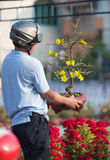 L'uomo vietnamita tiene l'albero di albicocca in fiore Fotografie Stock