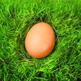 L'uovo. Fotografie Stock