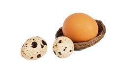 L'uovo del cuculo straniero nel nido ha sostituito le uova di quaglie Immagine Stock