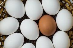 L'uovo di Brown integra con le uova bianche Immagine Stock Libera da Diritti