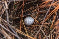 L'uovo di nido riempito di chiazzato Fotografia Stock