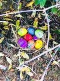 L'uovo di Pasqua variopinto con le foglie verdi ed asciuga il fondo delle foglie Fotografia Stock