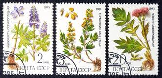 L'URSS - VERS 1985 : une série de timbres imprimés en URSS, herbes d'expositions, VERS 1985 Images libres de droits