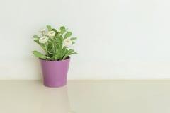 L'usine artificielle de plan rapproché avec la fleur blanche sur le pot pourpre sur le plancher de marbre brouillé et le mur de c Photo stock