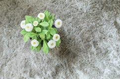 L'usine artificielle de plan rapproché avec la fleur blanche sur le pot pourpre sur le tapis gris a donné au fond une consistance Photos stock