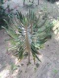 L'usine des variétés de cactus images libres de droits