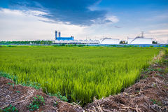 L'usine et le champ Photo libre de droits