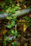 L'usine laisse le bordage le long d'une branche et un Web dans la forêt d'automne Photos libres de droits