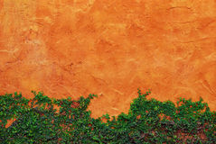 L'usine verte de plante grimpante sur le mur rouge Photos stock
