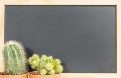 L'usine verte fraîche de cactus de plan rapproché sur le tableau noir brouillé a donné au fond une consistance rugueuse avec l'es Photographie stock