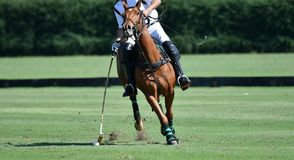 L'uso del giocatore di polo del cavallo un maglio ha colpito la palla Fotografia Stock