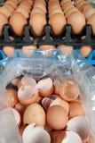 L'uso delle uova Immagini Stock