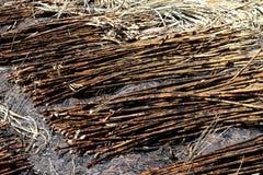 L'ustione della piantagione della canna da zucchero, la canna da zucchero, canna da zucchero ha bruciato il taglio sul fondo dell Fotografie Stock