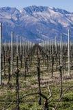 L'uva coltivare il campo Immagini Stock Libere da Diritti