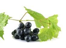 L'uva nera ha isolato Immagine Stock Libera da Diritti