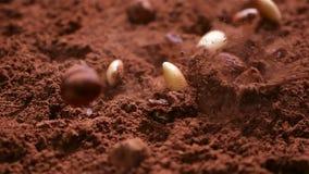 L'uva passa, le mandorle e le nocciole cadono in cacao in polvere - fine su stock footage