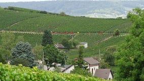L'uva raccoglie a à il ‰ pernay in Francia fotografia stock libera da diritti