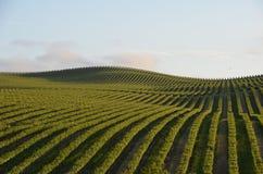 L'uva sistema Napa Valley sul modo a Santa Rosa Fotografie Stock Libere da Diritti
