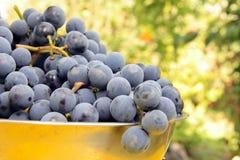 L'uva viola fresca sopra bawl Fotografie Stock Libere da Diritti