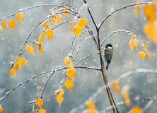 L Vogel, der Ende des Herbstes im Park auf einer Niederlassung eines b sitzt stockfotos