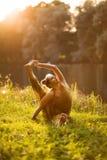 L'yoga della donna esercita all'aperto immagini stock