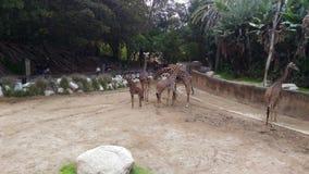 L A zoo royaltyfria foton