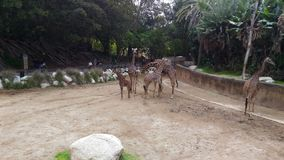 L.A. Zoo. Zoo at Los Angeles Royalty Free Stock Photos