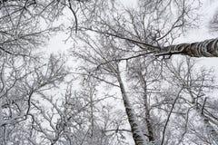 Laço da neve - os ramos das árvores cobertas com a neve foto de stock
